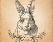 Lapin Bunny Print, Animal Vintage Illustration, Printable Image, INSTANT DOWNLOAD
