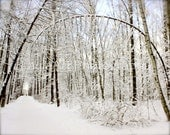 First Snow - Russian Winter - Forest in Snow - Fine Art Photograph 8x10 - LaylaArt