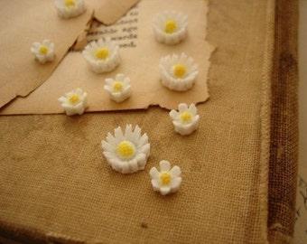 10 Pcs Little Daisy Flower Cabs
