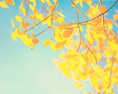 GOLDEN, autumn, fall, golden, yellow leaves, blue, sky, home decor, fine art photograph