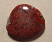 Utah's Agatized Red Fossil Horn Coral  ..............       27 x 25 x 6 mm ..........    a 4743