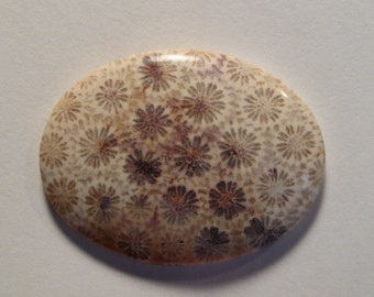Agatized Fossil Coral cab .....        40 x 30 x  5 mm  ........            589