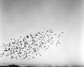 Birds Move- FIne Art Photography- California