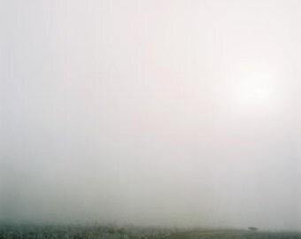Dog in the Fog- Fine Art Photography- Slovakia