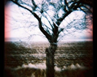Tree In The Middle- Fine Art Photography- Slovakia