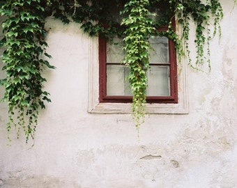 Ivy On The Window- Fine Art Photography- Hungary