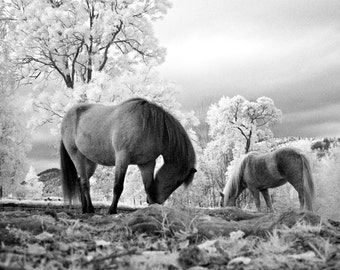 Invisible Horses - Infrared - Black and White Art Photograph - Scenery - Landscape - Animals - Oslo, Norway