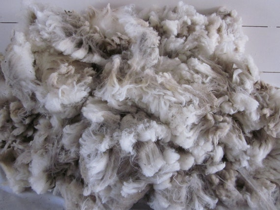Rambouillet Polypay Suffolk Cross Raw Unwashed Sheep Wool Fleece Number 10N5