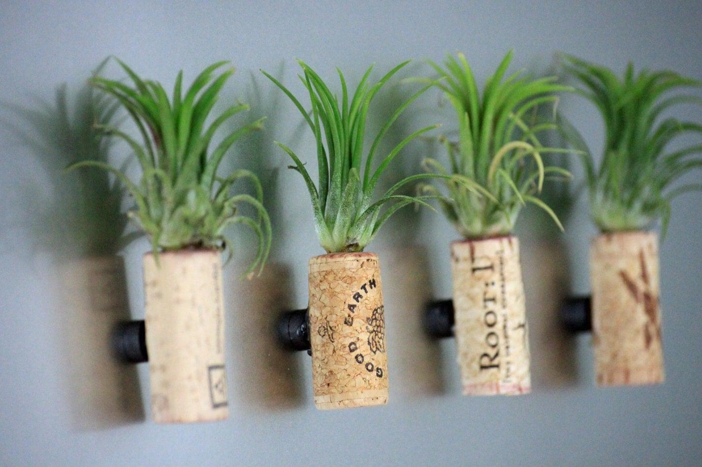 Live plant cork magnet living art unique air plant decor for Air plant planters