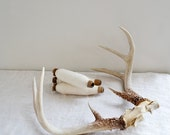 Vintage Antlers 8 Point Whitetail Buck Horns
