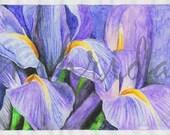 Irises -  Original Watercolor Painting by nihrida