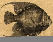 The Fish  sea animal food kitchen vintage ephemera for iron transfer download for fabric napkins tea towel handbag pillow Sheet n.215
