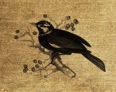 INSTANT DOWNLOAD Vintage Bird on a Tree Illustration - Download and Print - Image Transfer - Digital Sheet by Room29 - Sheet no. 106