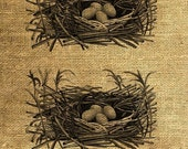 INSTANT DOWNLOAD Bird's Nest with Eggs Vintage Illustration - Download and Print - Image Transfer - Digital Sheet by Room29 - Sheet no. 115