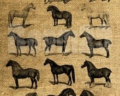 INSTANT DOWNLOAD Horses Vintage Illustration - Download and Print - Image Transfer - Digital Sheet by Room29 - Sheet no. 368