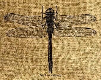 INSTANT DOWNLOAD Dragonfly Vintage Illustration - Download and Print Image Transfer Digital Sheet by Room29 Sheet no. 111