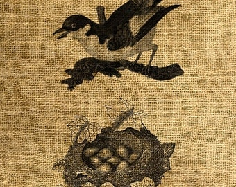 INSTANT DOWNLOAD Bird, Nest and Eggs Vintage Illustration - Download and Print - Image Transfer - Digital Sheet by Room29 - Sheet no. 268