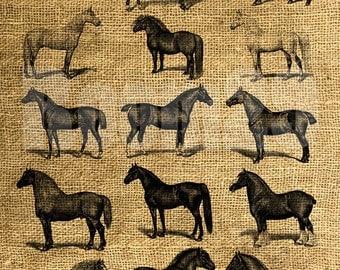 INSTANT DOWNLOAD Horses Vintage Illustration - Download and Print - Image Transfer - Digital Sheet by Room29 - Sheet no. 368