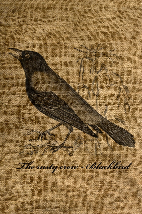 Vintage Blackbird Illustration - Download and Print - Image Transfer for Tote Bags, Pillows, Tea Towels and More - Digital Sheet by Room29 - Sheet no. 065