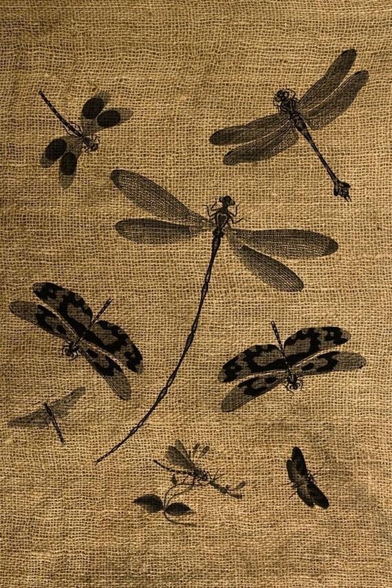 INSTANT DOWNLOAD Dragonflies Vintage Illustration Download and Print Image Transfer Digital Sheet by Room29 Sheet no. 070