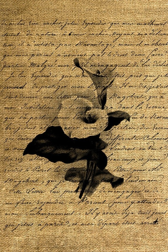 INSTANT DOWNLOAD Calla Lily on Calligraphy Vintage Illustration -Image Transfer - Digital Sheet by Room29 Sheet no. 617