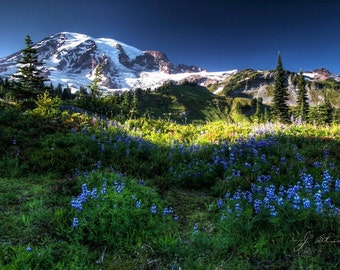 mount rainier landscape, fine art photography print, mountainview photo, rainier meadows, snow capped mountain, wild flowers blooming
