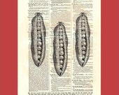 Vintage peas - upcycled 8x10 1898 dictionary page print - BONUS - Buy 3 Prints, Get 1 More For FREE