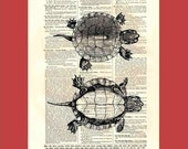 Vintage turtles - upcycled 8x10 1898 dictionary page print - BONUS - Buy 3 Prints, Get 1 More For FREE