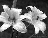 Flower black and white print - Magic - wall art fine art wedding anniversary lilies spring summer gift 20, home office decor