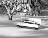 Winter Morning, Canada, scenery photograph, fine art, Christmas, park bench, bird house, snow, black and white, home office decor, gift 25