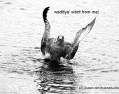 Humorous card - Waddya' Want From Me - Seagull on Beach - blank greeting card, write your own msg