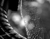 Spider web photograph, Spider Diamonds, Halloween, home office decor, gift under 30, gothic, spider web - Skybird111FineArt