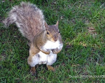 Curious Squirrel card, nature photography, write your own message, cute animals