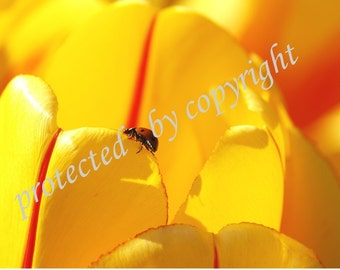 Ladybug card, The Journey, photo greeting card, blank 5 x 7, write your own msg, lady bug, yellow, tulip, red, sun, travel, life, macro