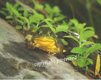 Frog photo card, Welcome to the Pond, Kermit lovers, blank card, write your own msg, suitable for framing Frog greeting card 5 x 7