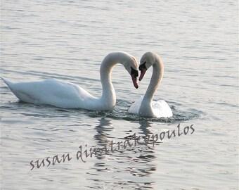 Swan Hearts, fine art photograph, wall art, home decor, nature photo, gift 20, home decor, birds lovers gift, wedding anniversary gift