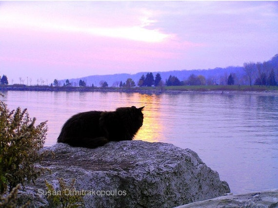 Cat greeting card, Another Day Ends, blank inside to write your own message, cat lovers card