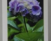 Pink Hydrangea (vertical)- Photo Card
