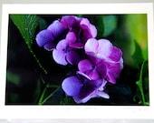 Pink/ Purple Hydrangea- Photo Card