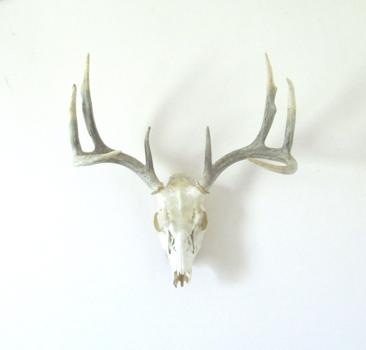 Vintage Deer Antlers Wall Hanging By Luckyjunk On Etsy