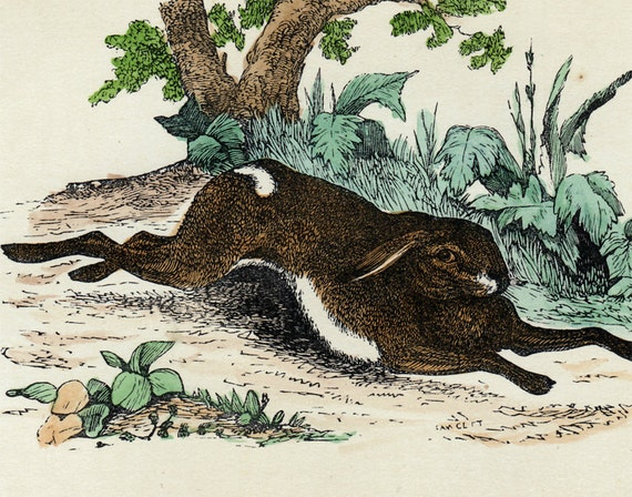 1849  Antique HARE print, handcolored,  a brown hare running across the field.