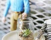 Mini Terrarium with Seashell Sand and Air Plant // Dollhouse Decor