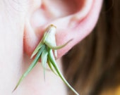 Live Plant Earrings // Green Air plants for your Lobes