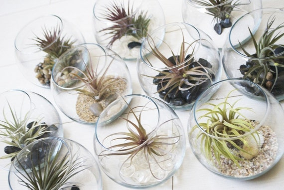 Fish Bowl Airplant Terrarium // Air Plant with Adornments