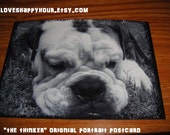 Postcard English Bulldog Black and White