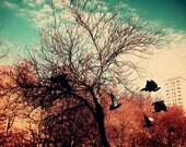 Spring VII - Fine Art Photography