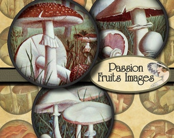 1.5 inch Circles  Vintage French Mushroom Images Digital Collage Sheet-- Instant Download