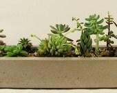 Long Concrete Tray, Concrete Planter
