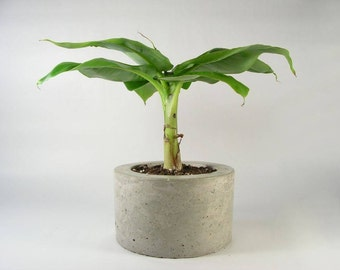 Round Concrete Planter - light grey