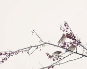 Birds and branches nature photo - original fine art photography print - red, winter, birds, branches, sky,